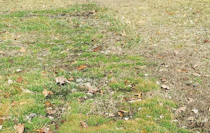 dark colored green grass septic tank pumping problem
