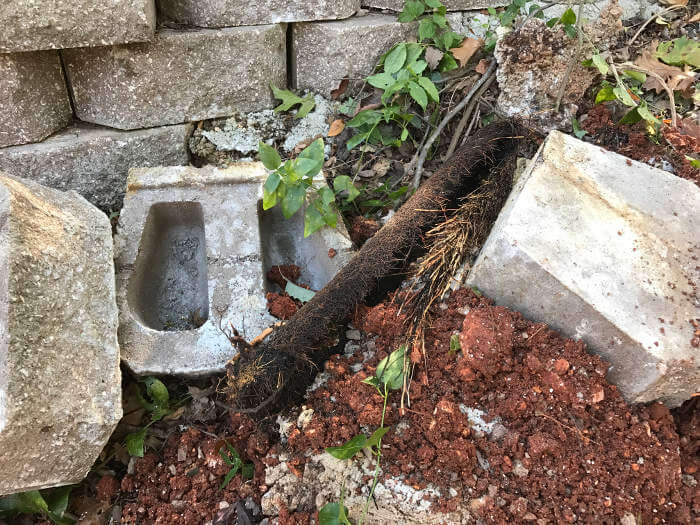root wad removed from sewer line 1-2-2017