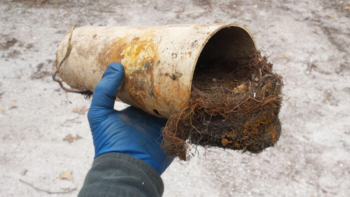 roots clogging lateral line assume septic tank cleaning required